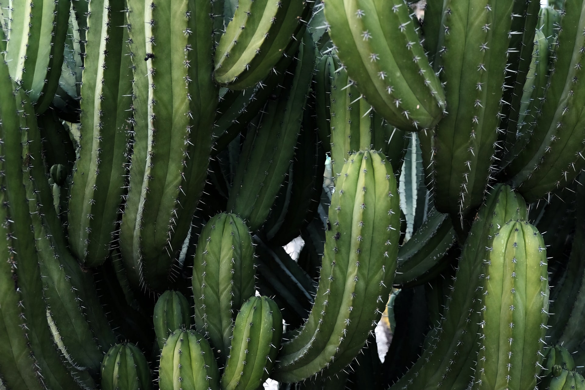 Sharp cactus picture to represent acupuncture in Melbourne